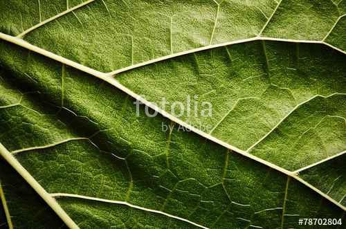 Растительность_18